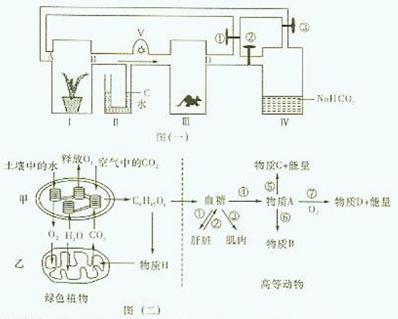 图(二)为该绿色植物和高等动物新陈代谢的部分过程