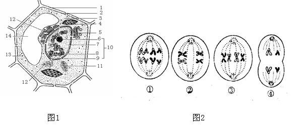 下图1为细胞亚显微结构模式图