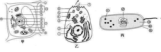 下图是细胞的亚显微结构模式图