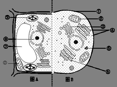 下图为动物细胞和植物细胞部分结构示意图