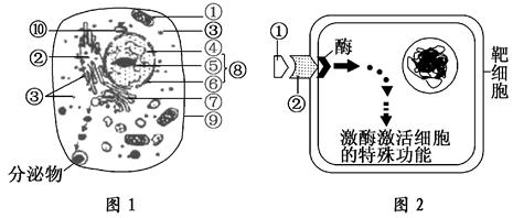 图1为高等动物细胞亚显微结构模式图,图2表示细胞间通讯中信号分子对