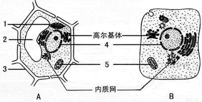 显微镜下的动物细胞结构图