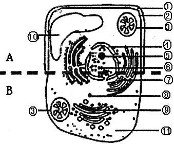 b是两种高等生物细胞亚显微结构模式图.据图