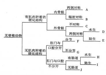 基于7个性状的10组动物的检索表:哪一组(a—j)