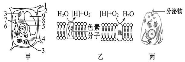 高等动物分泌细胞