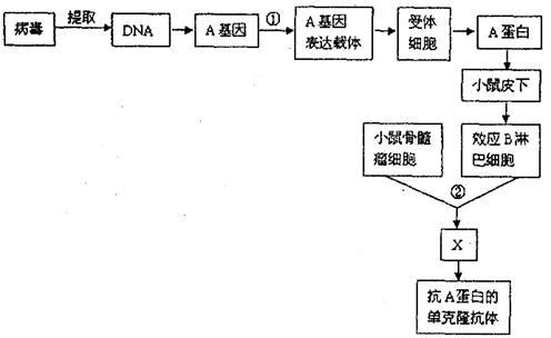 过程①构建a基因表达载体时